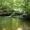 Deep Forest Journey – Dolly Sods Wilderness – Snake Hill